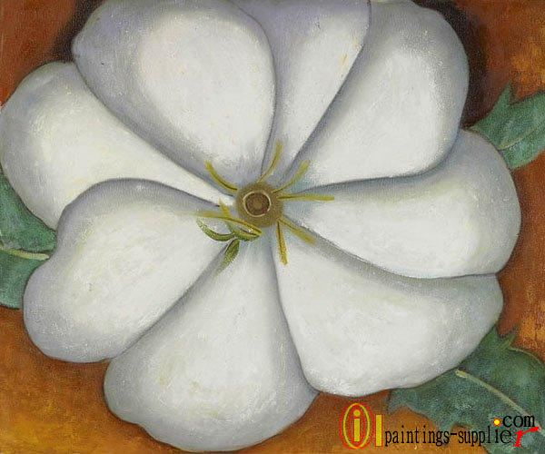 White Flower on Red Earth